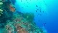セブ・バリカサグの水中景観 21432092