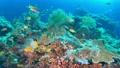 セブ・バリカサグの水中景観 21432097