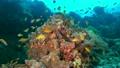 セブ・バリカサグの水中景観 21432101
