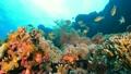 セブ・バリカサグの水中景観 21432103
