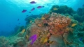 セブ・バリカサグの水中景観 21432104