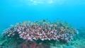 セブ・バリカサグの水中景観 21432106