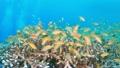 セブ・バリカサグの水中景観 21432108