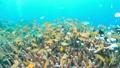 セブ・バリカサグの水中景観 21432109