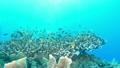 セブ・バリカサグの水中景観 21432111