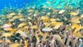 セブ・バリカサグの水中景観 21432113