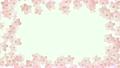 サクラ咲く アルファ付き 21445948