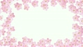 サクラ咲く (白バック) 21445952