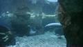 newborn manatee underwater 21539649