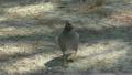 สัตว์,สัตว์ต่างๆ,นก 21628781