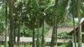 house, garden, tree 21784102