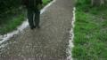 벚꽃지는 산책로 남자 혼자 21834901