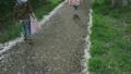 벚꽃지는 산책 소녀 소년 21835022