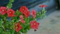 ดอกไม้,ดอกไม้บาน,โรงงาน 21873873