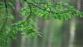 風に揺れる葉 21907820
