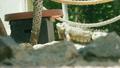 Iguana in Aruba 21977112