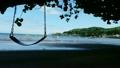 ハワイのビーチ そよ風吹く樹木の日陰の下 穏やかな入り江 ハワイ素材 海  21978016