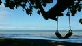 ハワイのビーチ そよ風吹く樹木の日陰の下 穏やかな入り江 ハワイ素材 海  21978017