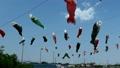 子供の日イメージ~第26回国分川鯉のぼりフェスティバル(市川市-千葉県)~ 22180633