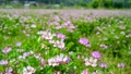 花 植物 レンゲソウの動画 22181233