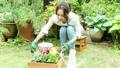 花を鉢に植える女性 22371172