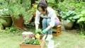 花を鉢に植える女性 22371173