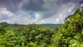 Tropical forest with clouds time lapse 22391475