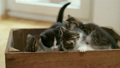 Kitten looking over the side of a wooden box 22394469