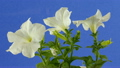 ดอกไม้,โรงงาน,ดอกไม้บาน 22475104
