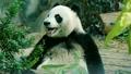 動物 食事をする 食事の動画 22707325