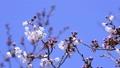 botanic, botanical, bloom 22708211