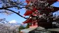 忠霊塔と桜と富士山-6142611 22743244