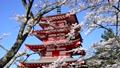 新倉山浅間公園の桜と忠霊塔-6142721 22743247