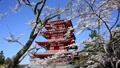 新倉山浅間公園の桜と忠霊塔-6142724 22743248