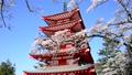 新倉山浅間公園の桜と忠霊塔-6142737 22743249