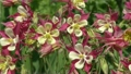 ดอกไม้,เบ่งบาน,บานสะพรั่ง 22763647