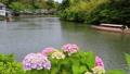 ぐるっと松江堀川めぐり 紫陽花の咲く頃 塩見縄手 22799997
