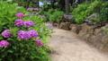 紫陽花の咲く小道 22841987