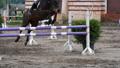 동물, 말, 장애물 22864168