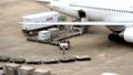 飛行機 荷物の搬入 タイムラプス 22992220