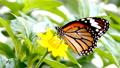 蝴蝶 动物 虫子 23033092