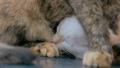 ねこ ネコ 猫の動画 23133800