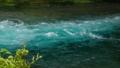 柿田川 富士山の湧水 23320780