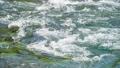 川 清流 河川の動画 23320789