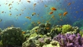 Tropical Fish on Vibrant Coral Reef 23370031
