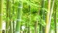 竹林 緑 風 夏 スライダー撮影 ズームアウト 23414862