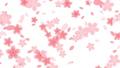 背景 桜 ループ 23647641