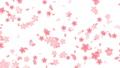 背景 桜 ループ 23647655
