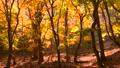 紅葉の森 23653256