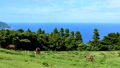 태평양을 내려다 야생마의 언덕 23779715